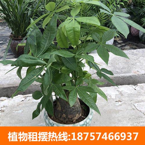 寧波花卉租擺需要注意什么_推薦碧海怡景園林綠化