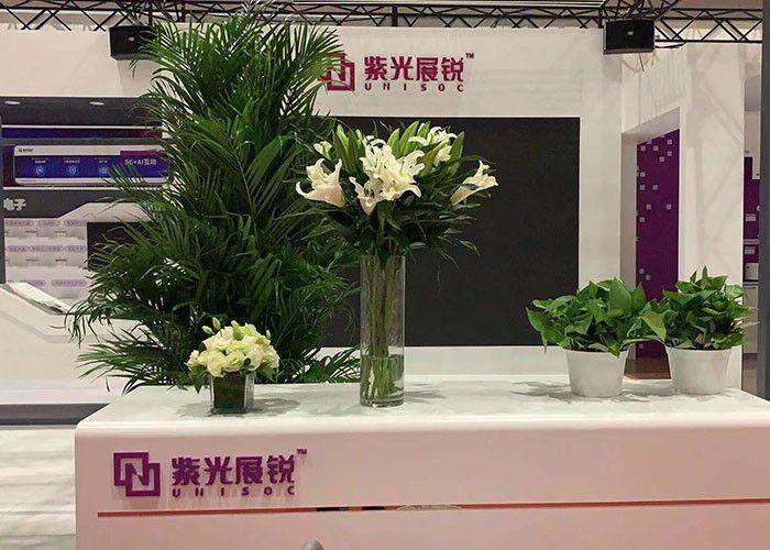水培花卉植物图片