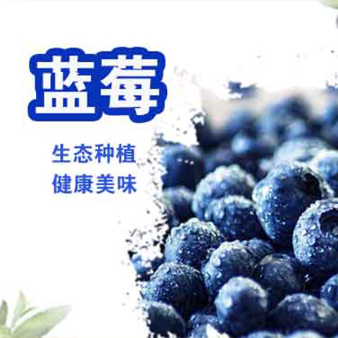 480蓝莓
