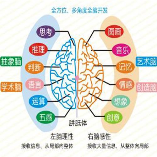 全腦教育課程-未來園