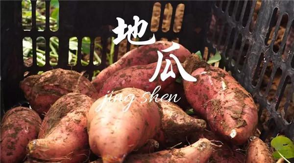 红薯批发价