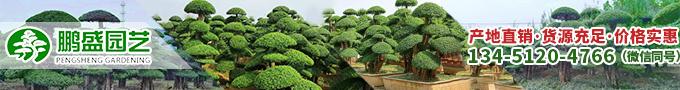 對節白蠟造型樹