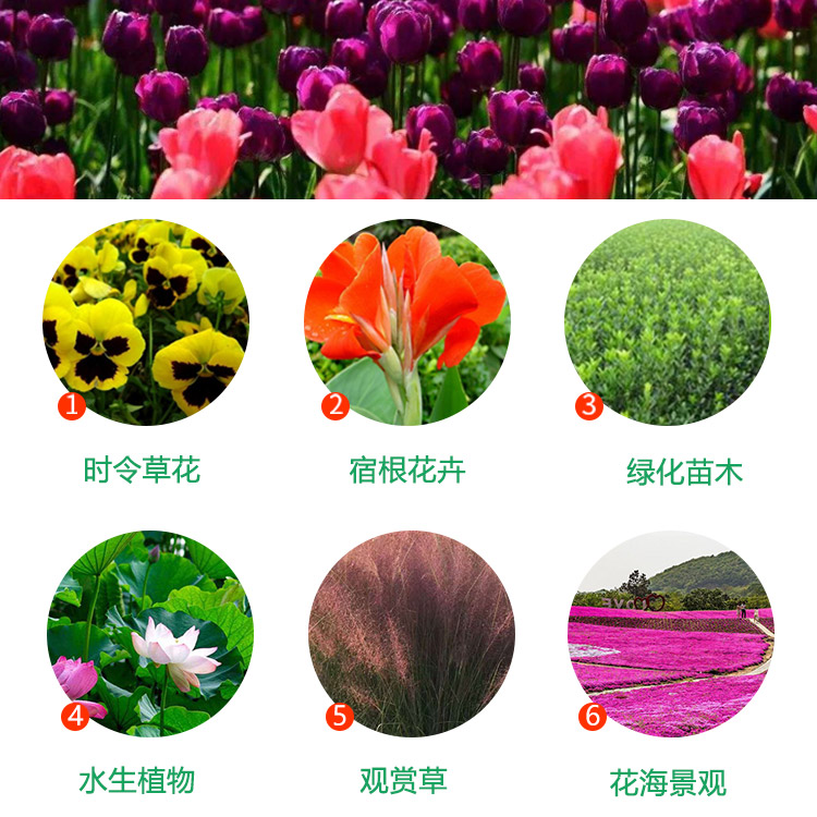 花卉租擺品種全_綠化苗木哪里賣_設計景觀花卉花海及配套設施